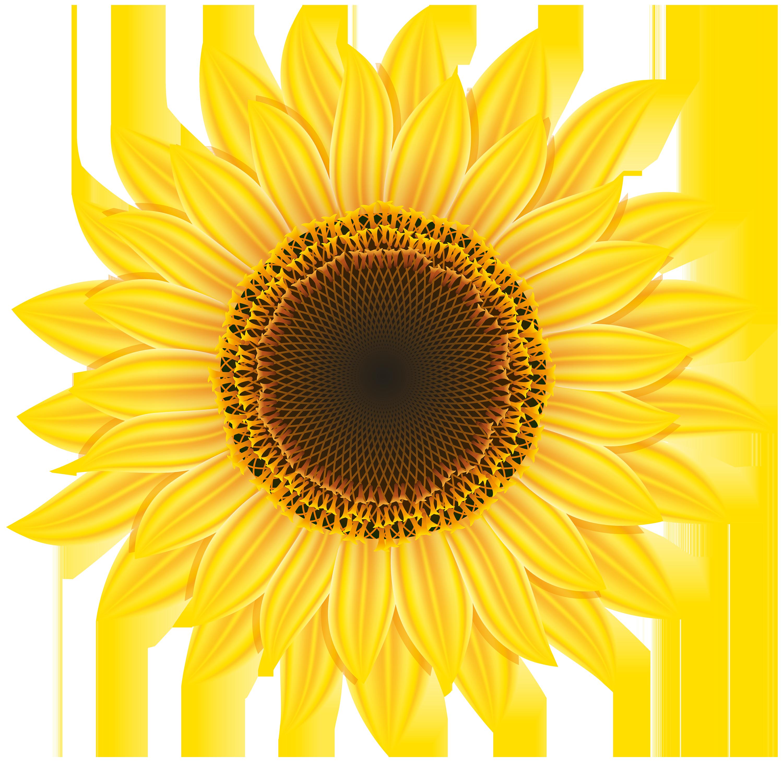 Sunflower Clipart Web-Sunflower clipart web-18