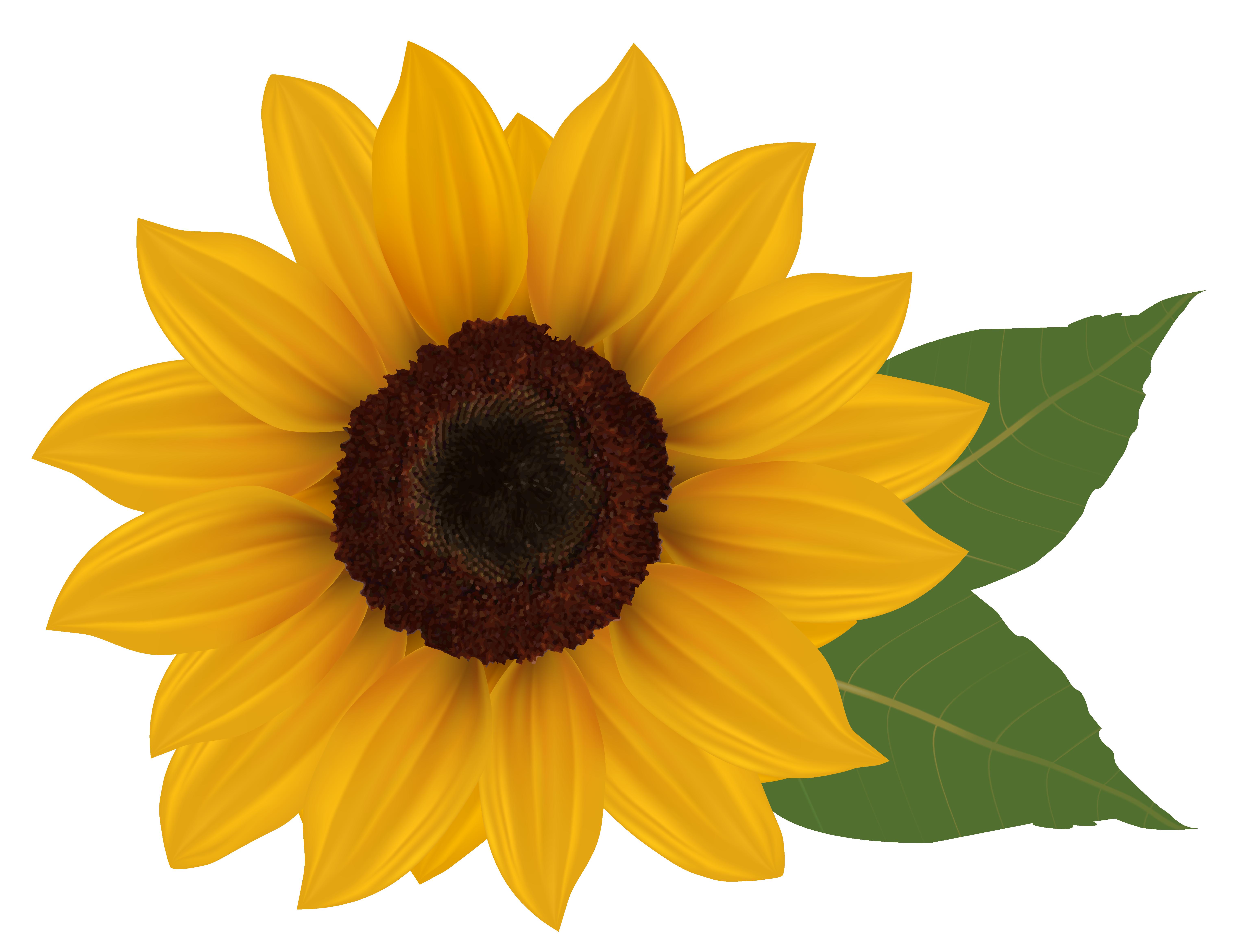 Sunflower Clip Art u0026amp;