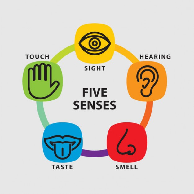 The 5 Senses On Emaze-The 5 senses on emaze-18