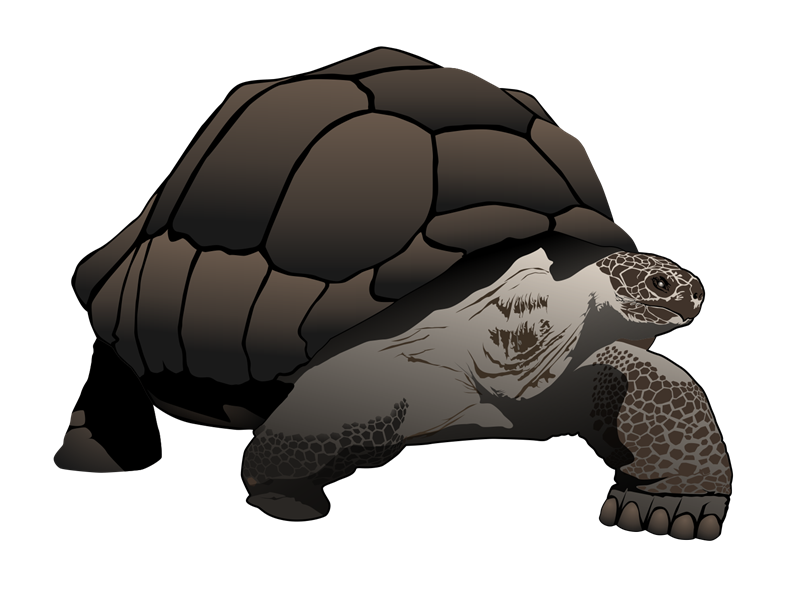 The Galapagos Tortoise Is The Largest Li-The Galapagos tortoise is the largest living tortoise in the world. It is native to the Galapagos islands in Central America. You can use this clip art of ...-6