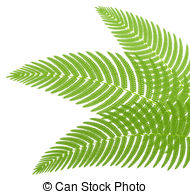 ... The green leaves of a fern. Vector i-... The green leaves of a fern. Vector illustration.-6