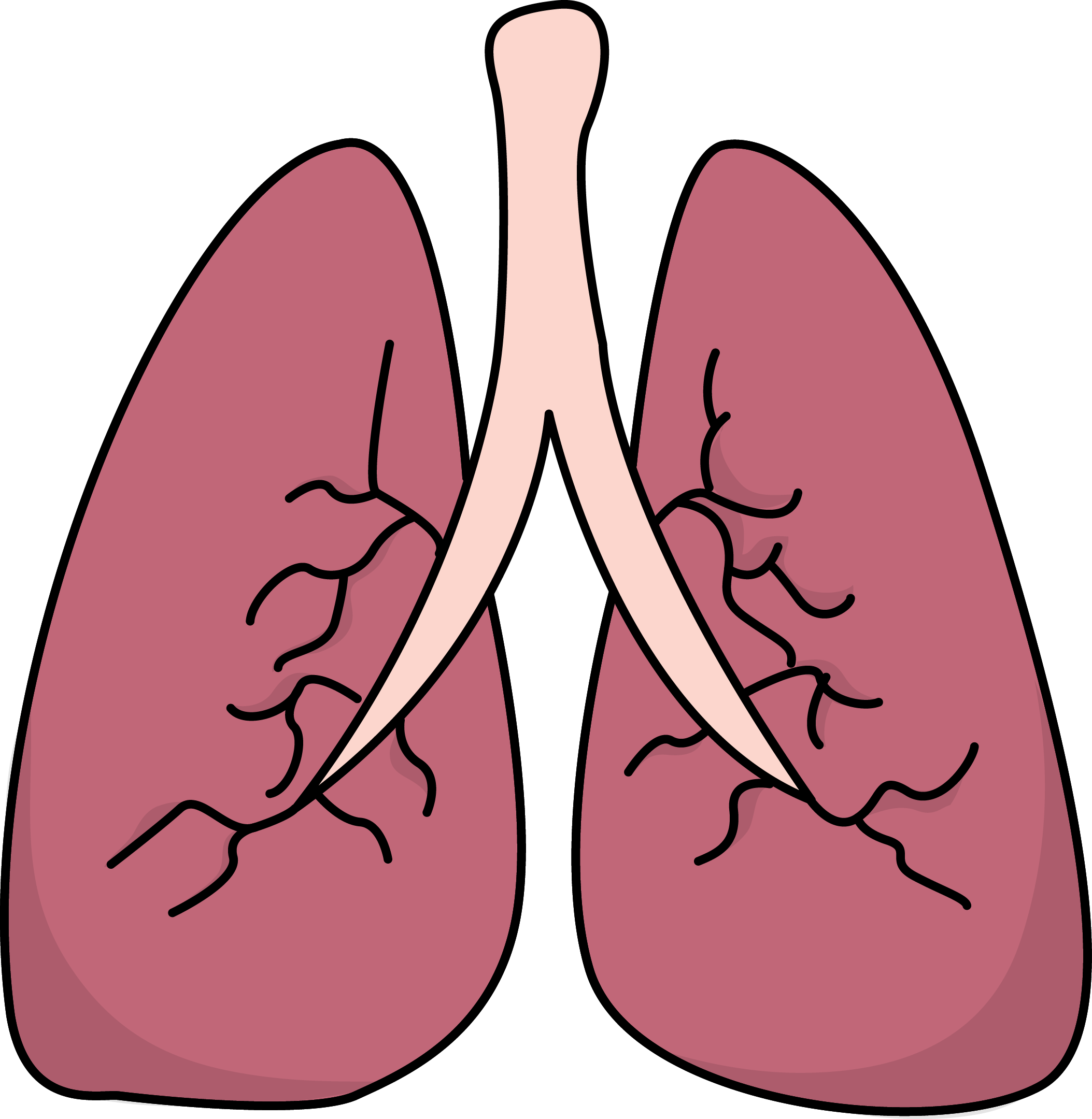 The Human Lung For Kids Clipart With Labels - ClipArt Best