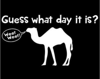 There Is 42 It S Hump Day Free Cliparts All Used For Free