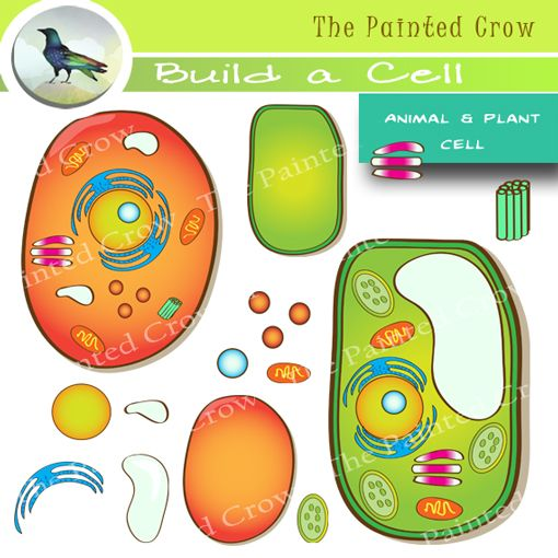 This Build a Cell clipart set features one pre-built plant cell, one pre
