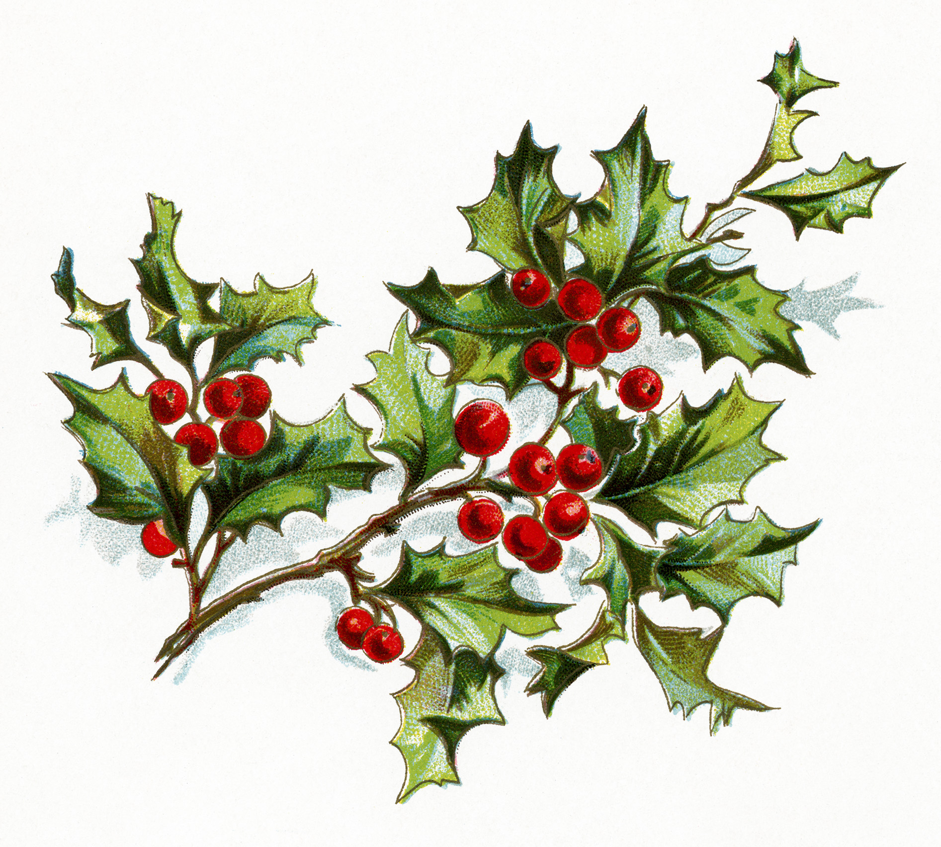 This Lovely Sprig Of Holly And Berries Is From A Book Of Poetry Titled