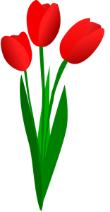 Three Red Tulips-Three Red Tulips-13