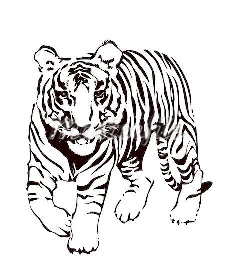 Tiger Clip Art Black N White - Clipart library. 400-05250521w.jpg