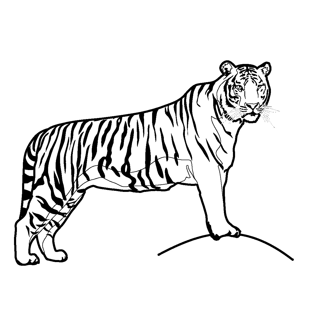 Tiger Clip Art Pictures Black And White | Clipart library - Free