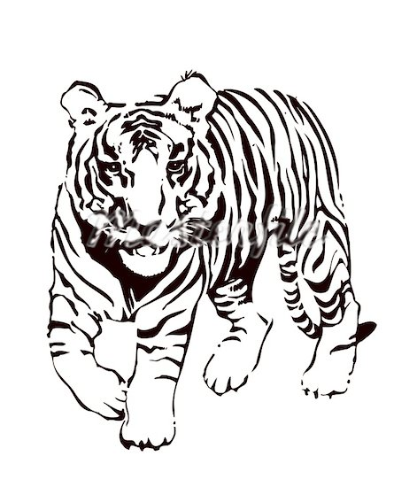 Tiger Clipart Black And White Clipart Pa-Tiger Clipart Black And White Clipart Panda Free Clipart Images-6