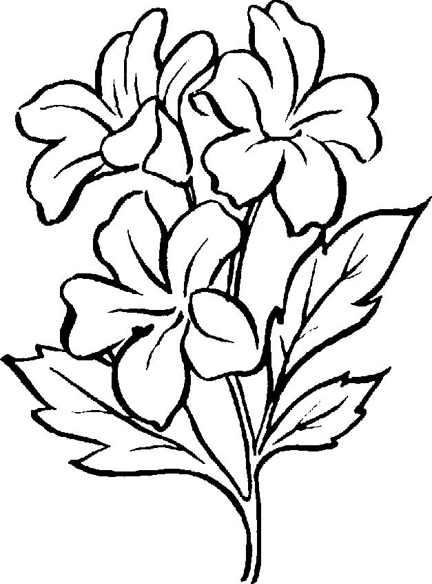 Tomato Plant Clipart Black And White-Tomato Plant Clipart Black And White-17