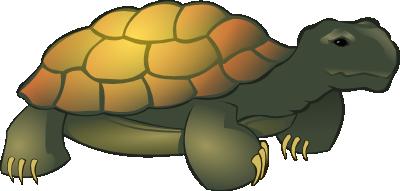 Tortoise Clipart-tortoise clipart-8
