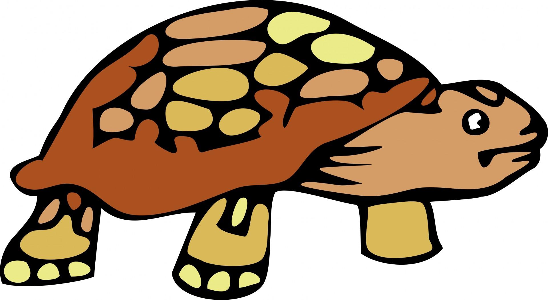 ... Tortoise Clip Art ...-... Tortoise Clip Art ...-13