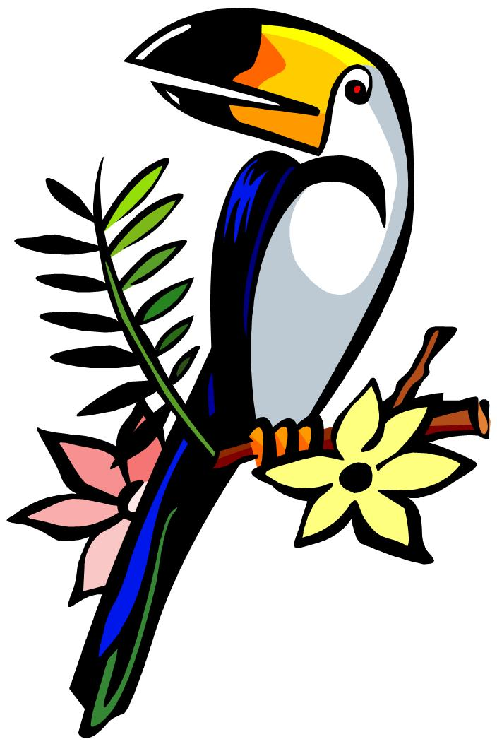 Toucan Clipart