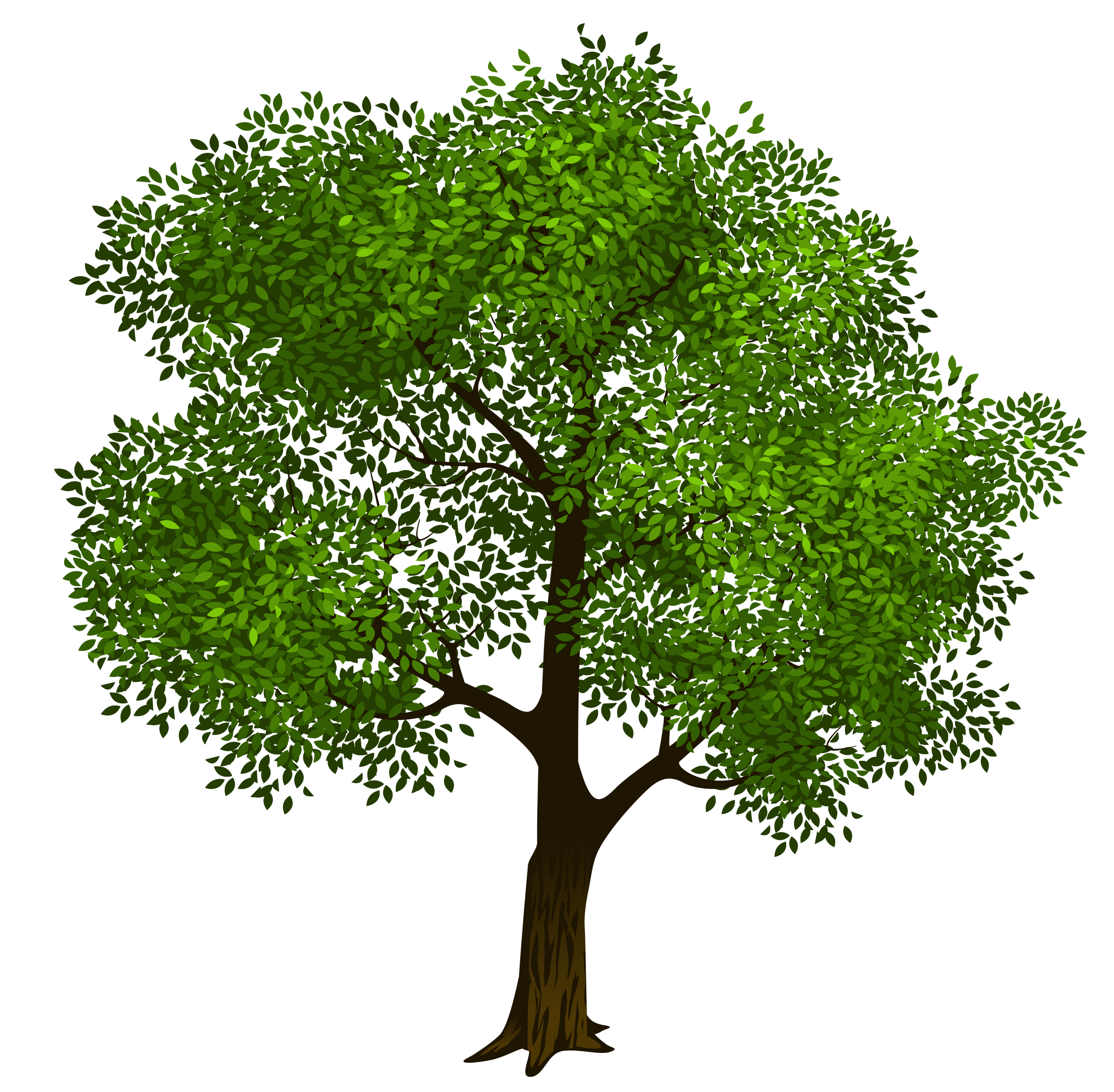 Transparent Green Tree Clipart Picture 6-Transparent green tree clipart picture 6-13