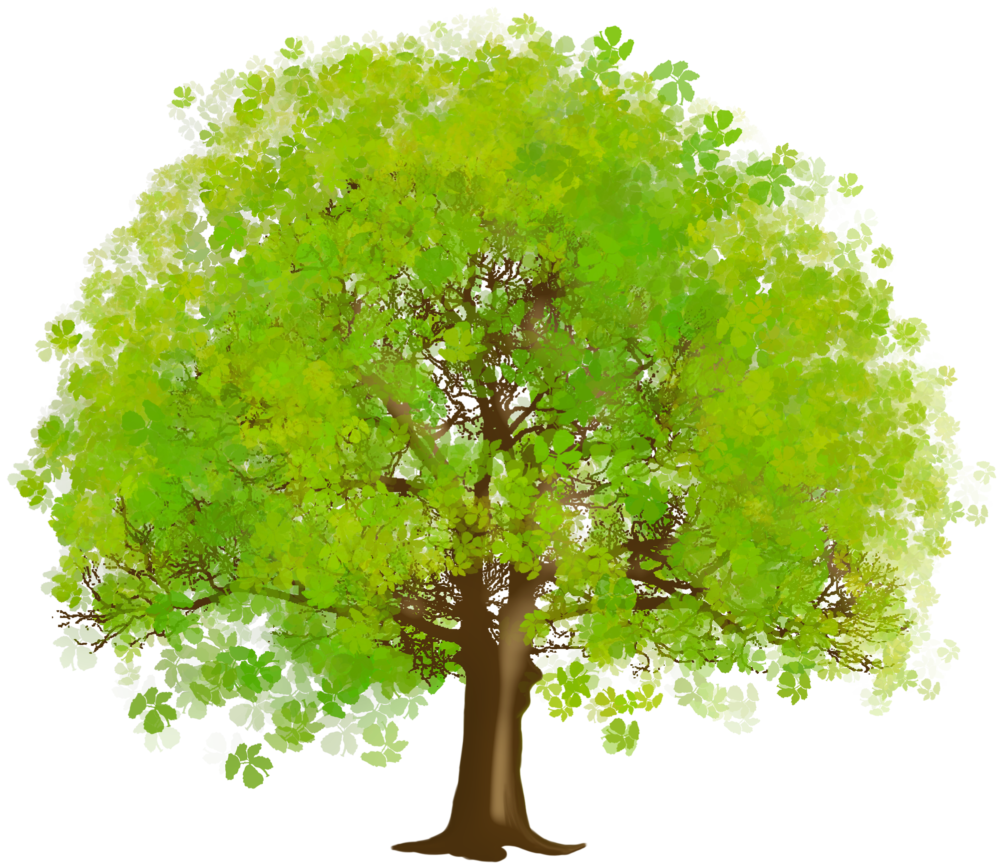 Large Green Tree PNG Clipart-Large Green Tree PNG Clipart-13