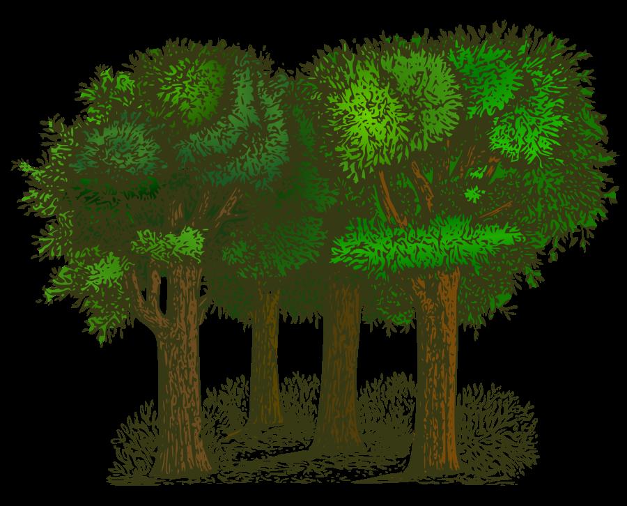 Trees-Trees-14