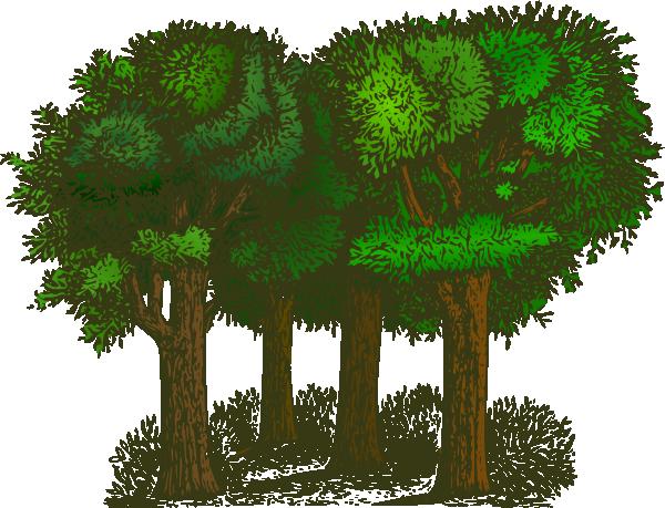 Trees Jungle Clipart Clipart Kid-Trees jungle clipart clipart kid-16