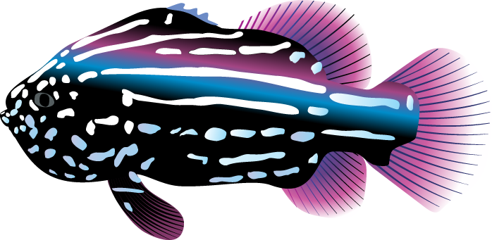 Tropical Fish Clipart-tropical fish clipart-9