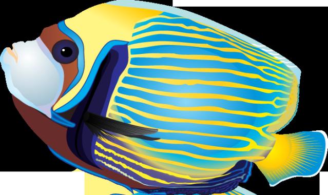Tropical Fish Clip Art-tropical fish clip art-15