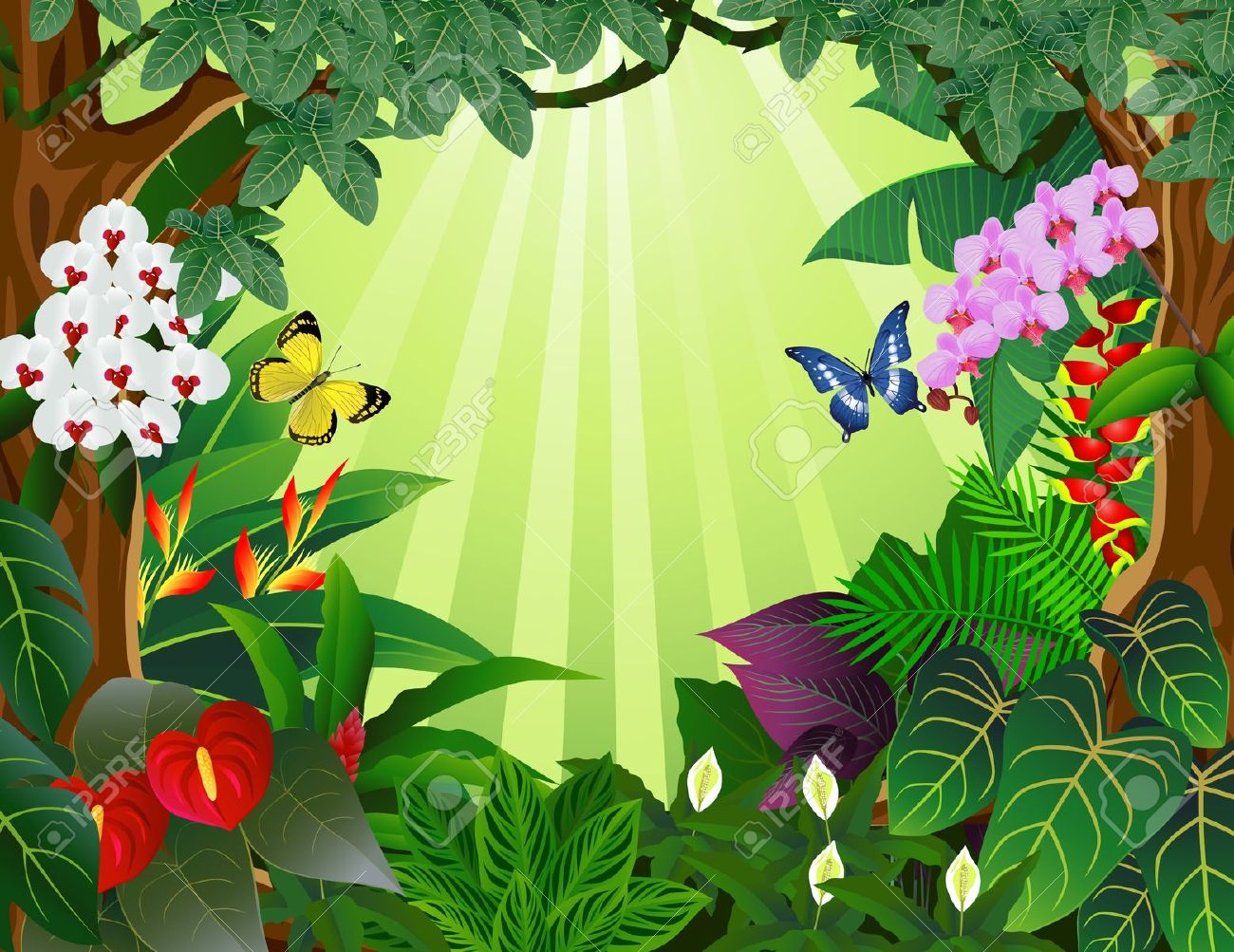 tropical rain forest: Tropical forest bacground