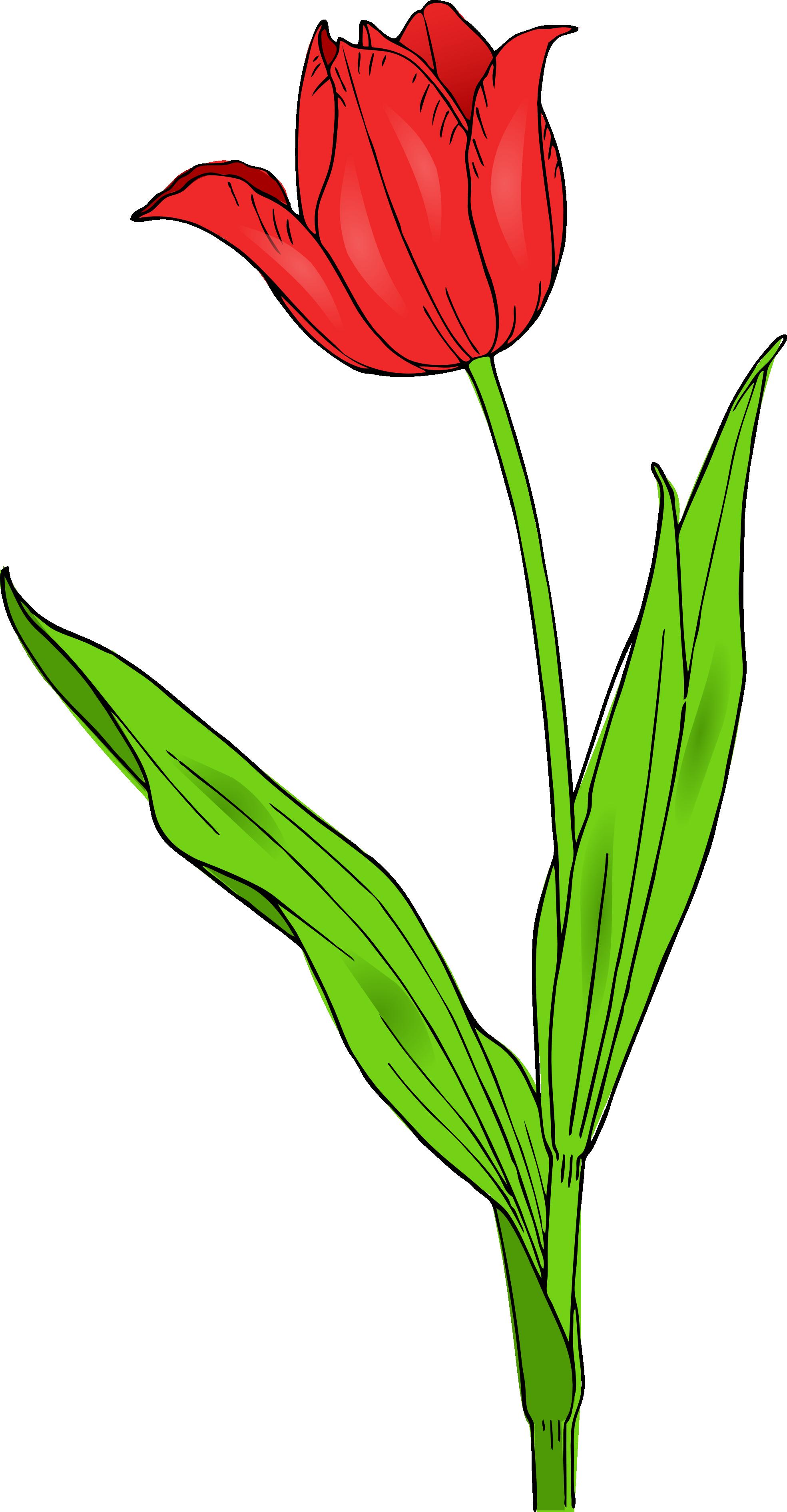 Tulip Clip Art Clipart-Tulip clip art clipart-7