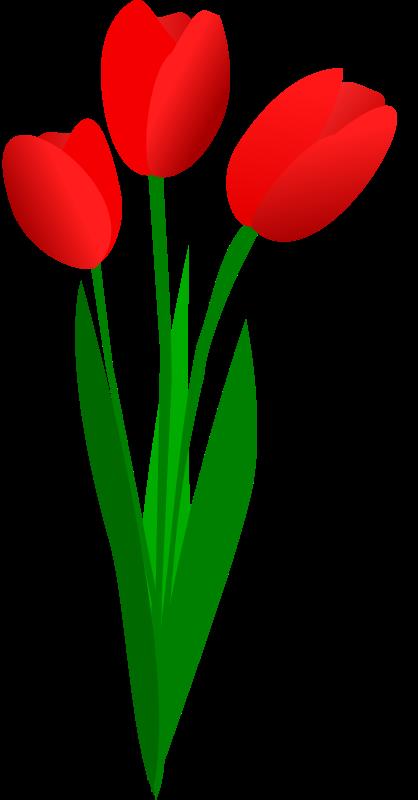 Tulip Flower Clipart-Tulip Flower Clipart-15