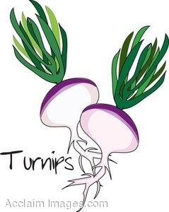 ... Turnip Clipart ...-... Turnip Clipart ...-11