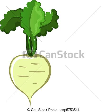 Turnip - Vegetable-Turnip - Vegetable-14