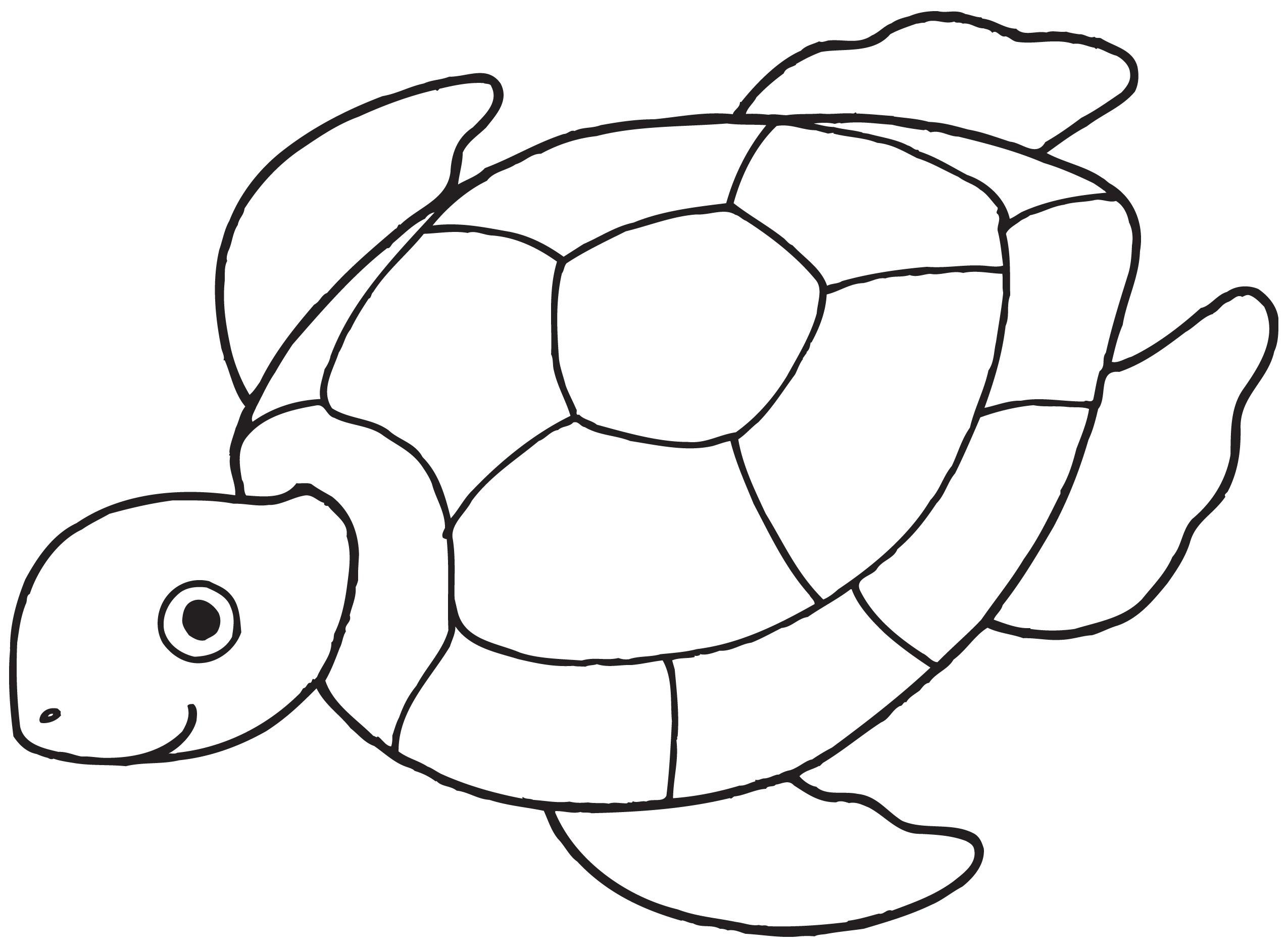 Turtle Clip Art-Turtle Clip Art-17