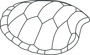 Turtle Shell Outline Clip Art