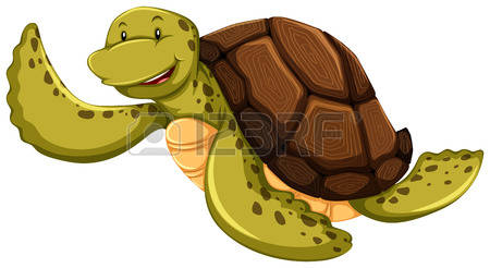 turtle shell: Smiling turtle on a white background