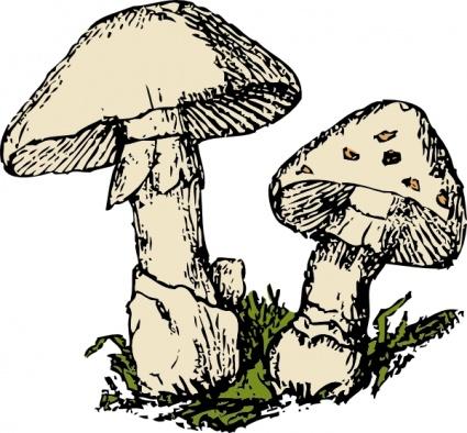 ... Two_mushrooms_clip_art.jpg; Mushroom-... two_mushrooms_clip_art.jpg; Mushroom Clip Art ...-16