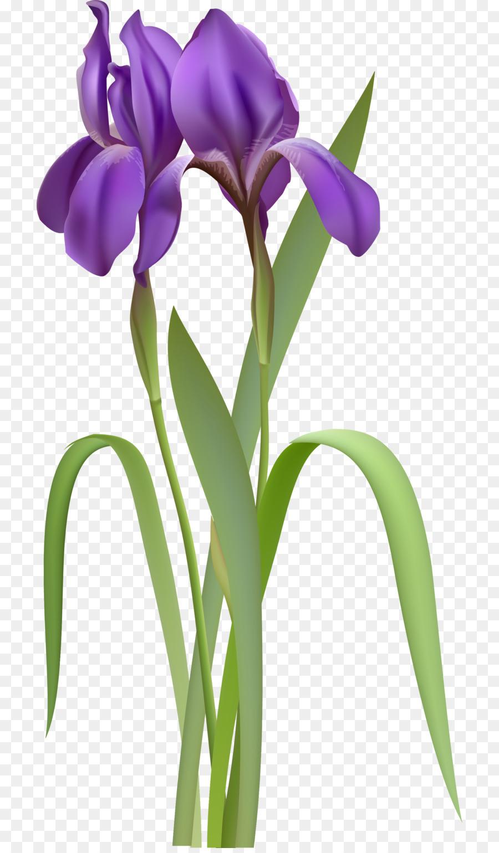 Iris flower data set Clip art - unlimited clipart