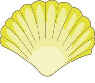 Seashell clip art sea shells