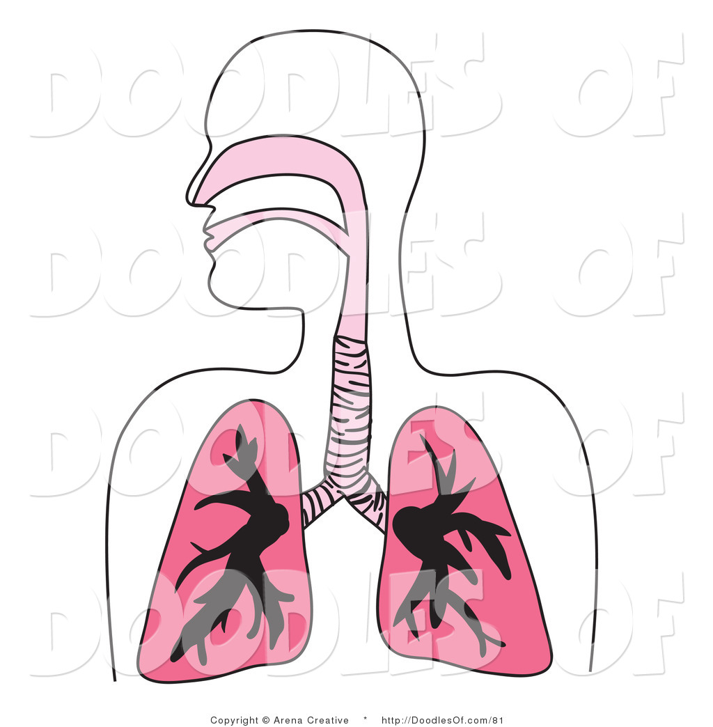 Vector Clipart of a Human Respiratory System Diagram in Pink