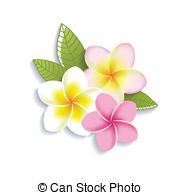 ... Vector plumeria flowers on a white background - Vector.