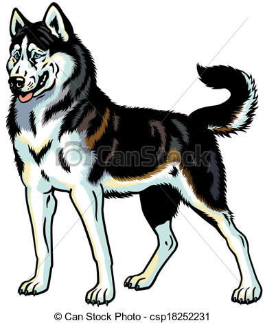 Vectors Of Siberian Husky Dog Siberian Husky Breed Illustration