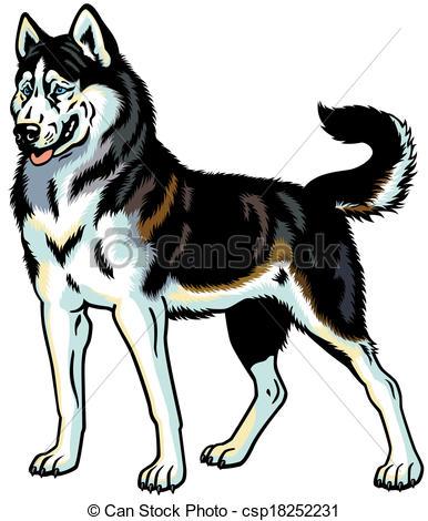 Vectors Of Siberian Husky Dog Siberian H-Vectors Of Siberian Husky Dog Siberian Husky Breed Illustration-8