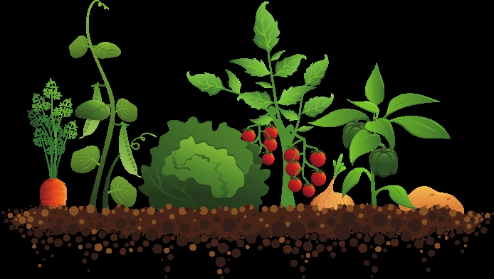 vegetable garden clipart vegetable garden clipart familyhouse co 2 clipartall