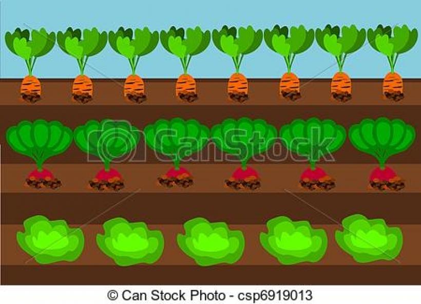 Vegetable Garden Clipart Vegetable Garde-vegetable garden clipart vegetable garden clipart vector graphics 10690 vegetable garden-14