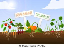 ... Vegetable Garden Poster - Vegetable -... Vegetable garden poster - Vegetable food garden poster of.-16