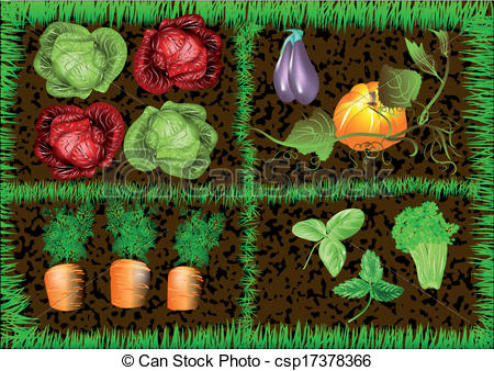 Vegetable garden Vector Clipartby EVA1052/149; vegetable garden. 10 EPS, using mesh gradient