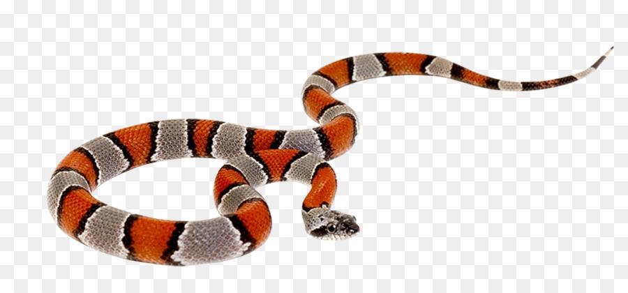Snake Reptile Cobra Clip art  - Venkateswara Clipart