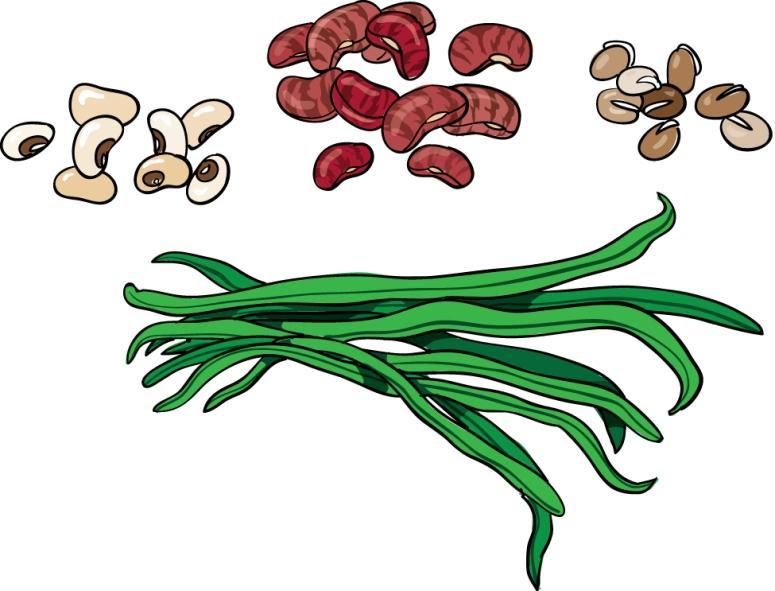 View beans.jpg Clipart
