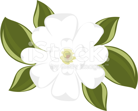 View Of Southern Magnolia Illustration T-View Of Southern Magnolia Illustration Top Clipart Free Clip Art-16