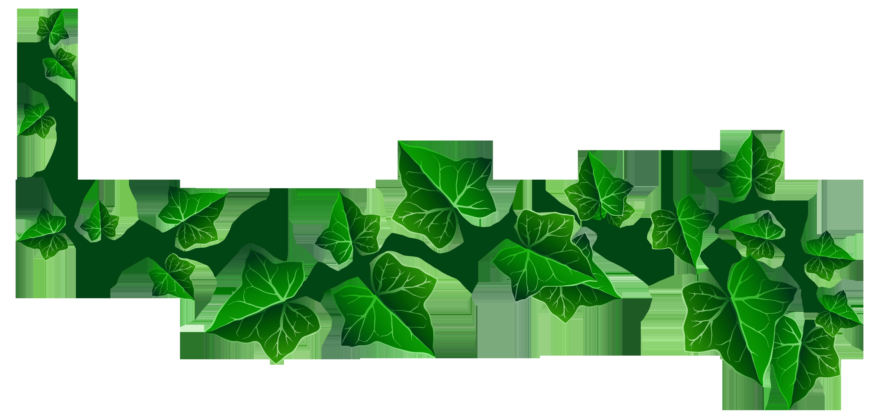 Vine Ivy Decoration PNG .-Vine Ivy Decoration PNG .-7