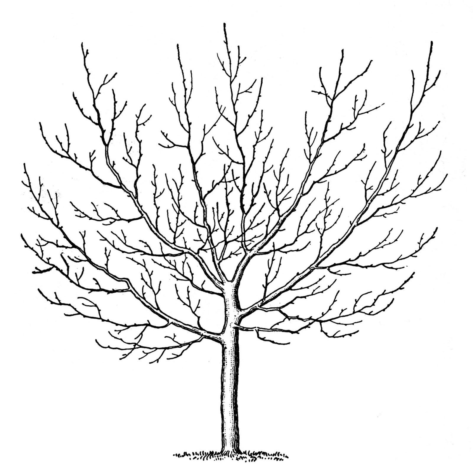 Vintage Clip Art u2013 Winter Trees