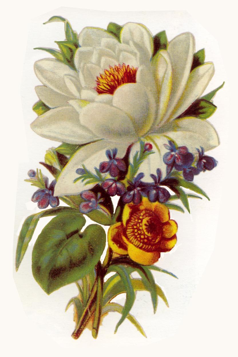 Vintage Flower Clipart - Vintage Flower Clip Art