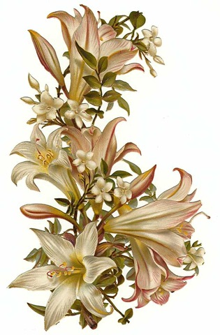 vintage flowers white orchids ...