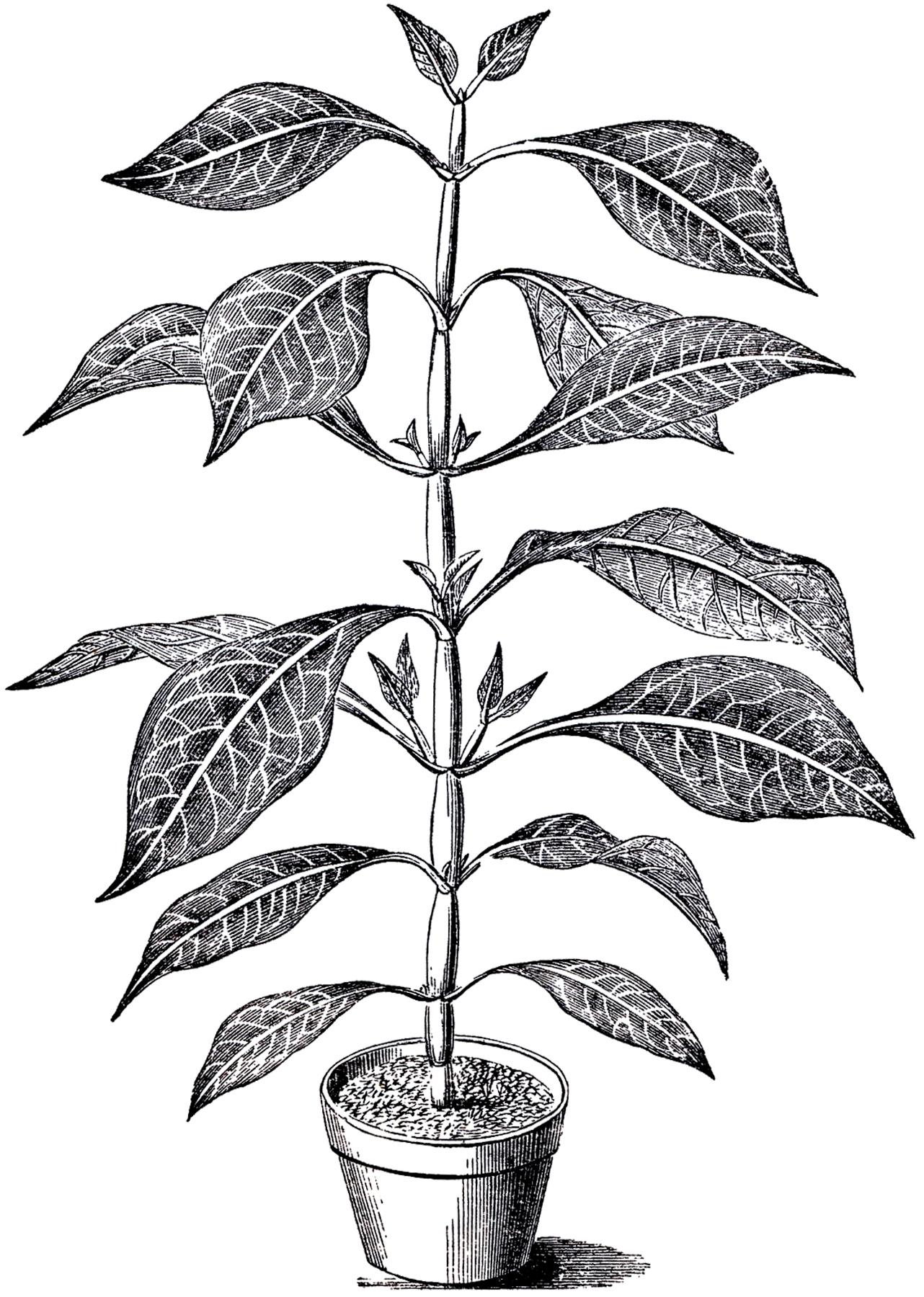 Vintage Potted Plant Image-Vintage Potted Plant Image-18